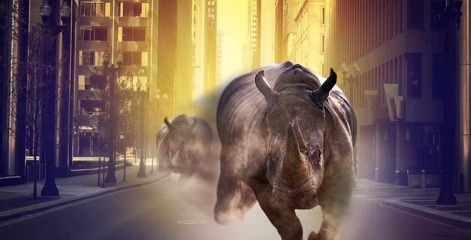 rhino7_How_Did_Rhino7_Come_To_Be